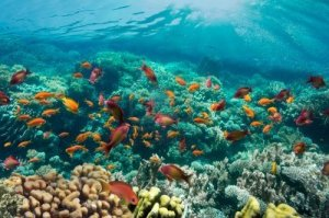 14992589-coral-reef-and-tropical-fish-in-sunlight